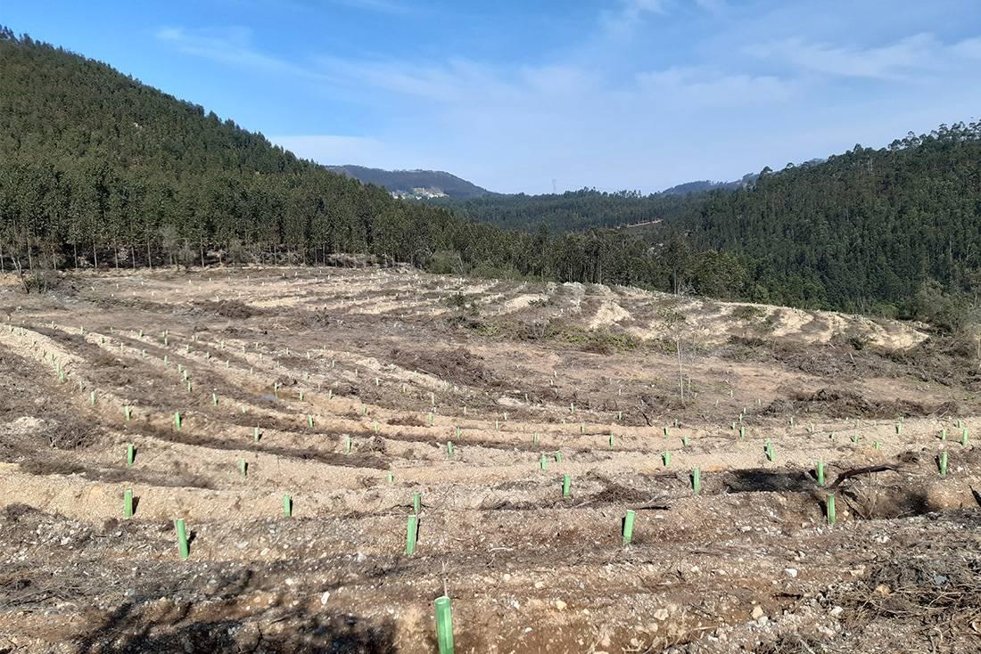 Mais 10 hectares de floresta nativa – o Programa Metro Quadrado da LIPOR expande-se nas Serras do Porto com o apoio do Fundo Ambiental