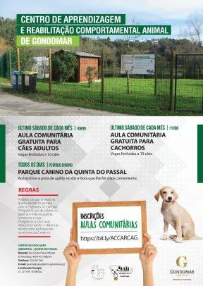 Aulas comunitárias gratuitas para cães e cachorros